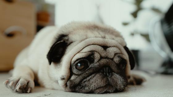 Schlafprobleme machen den anstrengenden Alltag im Wechsel nicht einfacher
