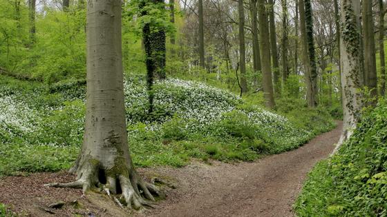 Spaziergänge im Wald fördern Heilungsprozesse und Wohlbefinden